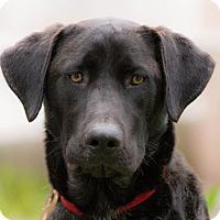Adopt A Pet :: Alf - La Jolla, CA