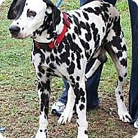 Adopt A Pet :: Sgt. Billy Pepper - Newcastle, OK