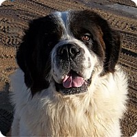 Adopt A Pet :: Snoopy - Sparks, NV