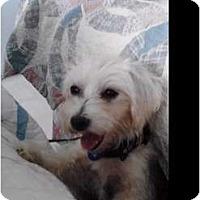 Adopt A Pet :: BB - Brewster, NY