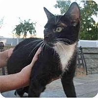 Adopt A Pet :: Sammy - New Egypt, NJ