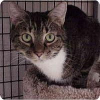 Adopt A Pet :: Sox - Deerfield Beach, FL