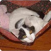 Adopt A Pet :: Lynette - Belton, MO