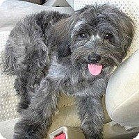 Adopt A Pet :: LUCIE LOO - Mission Viejo, CA