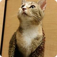 Adopt A Pet :: Missy - Colmar, PA