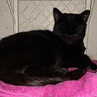 Adopt A Pet :: Hobo - Benton, PA