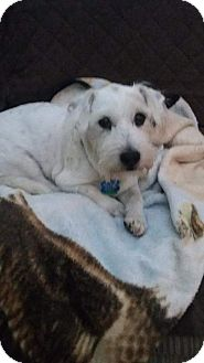 Jack Russell Terrier Mix Dog for adoption in Ogden, Utah - Trixie