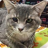 Adopt A Pet :: Journey - McKinney, TX