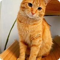 Adopt A Pet :: TYSON - Toledo, OH