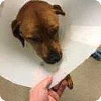 Adopt A Pet :: Seth 2336 - Columbus, GA