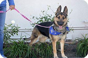 German Shepherd Dog Dog for adoption in Irvine, California - Lani