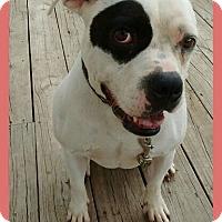 Adopt A Pet :: Rosie - Bay City, MI
