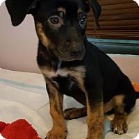 Adopt A Pet :: !! Tucker - Colton, CA
