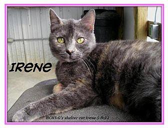 Domestic Shorthair Cat for adoption in Geneseo, Illinois - Irene