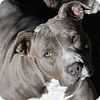 Adopt A Pet :: Maggie Mae - Valley Springs, CA