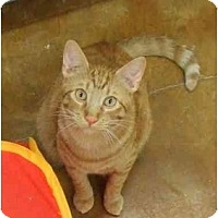 Adopt A Pet :: Cyril - Lake Charles, LA