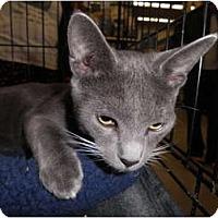 Adopt A Pet :: Sully - Warren, MI