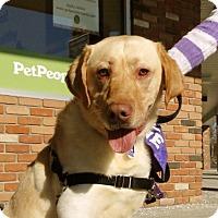 Adopt A Pet :: Levi - Beachwood, OH