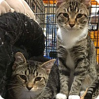 Adopt A Pet :: George - West Lafayette, IN