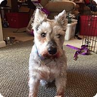 Adopt A Pet :: Jay - Laurel, MD