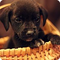 Adopt A Pet :: Miles-Adoption Pending - Fredericksburg, VA