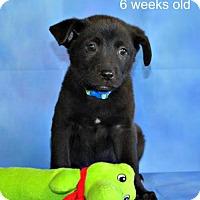 Adopt A Pet :: Bizzy - Yreka, CA