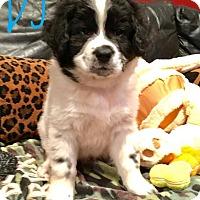 Adopt A Pet :: DJ - Milton, GA