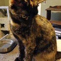 Adopt A Pet :: Mochi - Richardson, TX