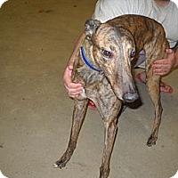 Adopt A Pet :: CTW Logan's Run - Knoxville, TN