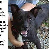 Adopt A Pet :: # 385-09 - Animal Shelter - Zanesville, OH