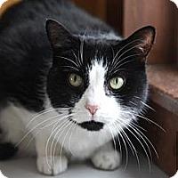 Adopt A Pet :: Ohso - Lancaster, MA