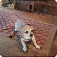Adopt A Pet :: Poquito - Concord, CA