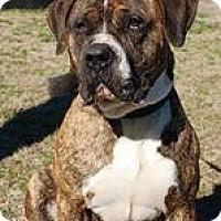 Adopt A Pet :: Hercules - Pompton Lakes, NJ