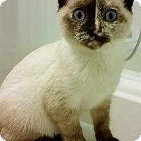 Adopt A Pet :: Idina - Chattanooga, TN