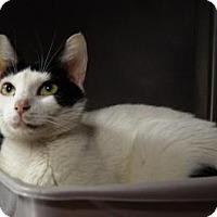 Adopt A Pet :: Zelma - New Milford, CT