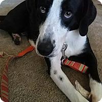 Adopt A Pet :: Carraway - Evans, GA