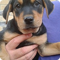 Adopt A Pet :: Bradley - White Settlement, TX