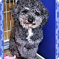 Adopt A Pet :: Russell - San Jacinto, CA