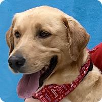 Adopt A Pet :: Dusty - Evansville, IN