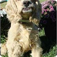 Adopt A Pet :: Lady - Sugarland, TX