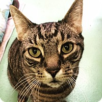 Adopt A Pet :: Dylan - New York, NY