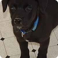 Adopt A Pet :: Geno - Pleasant Plain, OH