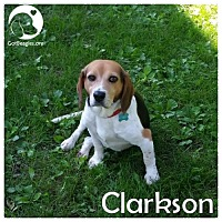 Adopt A Pet :: Clarkson - Chicago, IL
