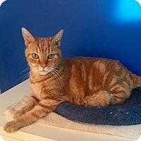 Adopt A Pet :: Abe - Mount Pleasant, SC