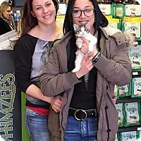 Adopt A Pet :: Leaf - River Edge, NJ