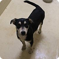 Adopt A Pet :: A01 Alexandra - Odessa, TX