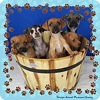 Adopt A Pet :: Manchu - Yucaipa, CA