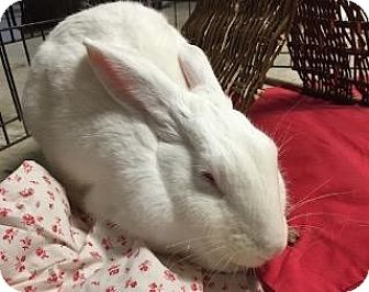 New Zealand Mix for adoption in Woburn, Massachusetts - Ariel