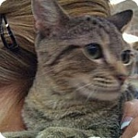 Adopt A Pet :: Danny - Modesto, CA