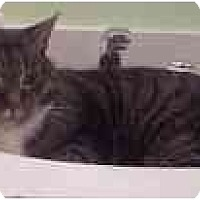 Adopt A Pet :: Nelson - Arlington, VA